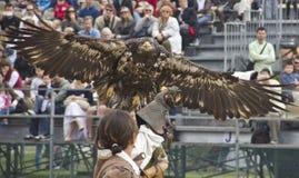 Adlerflugwesen, zum der Nahrung auf Hand des Mannes zu erhalten Lizenzfreie Stockfotografie