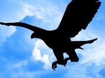 Adlerjagd Stockbild