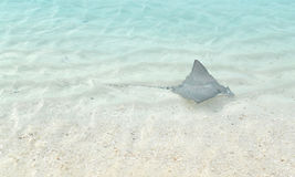 Adlerrochen, Malediven Stockfotografie