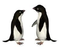 Adélie Penguins Stock Photos