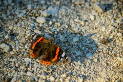 Admiral butterfly on the gravel path royalty free stock image