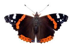 admiral motyla czerwień Zdjęcia Royalty Free