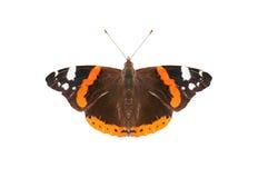 admiral motyla czerwień Obrazy Royalty Free
