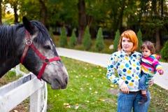 Admirando o cavalo Fotos de Stock
