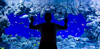 Admire coral fishes. Man looking for coral fishes in aquarium Royalty Free Stock Photo