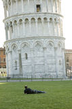 Admire the leaning tower Stock Photography