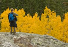Admiring The Aspens. This is an image of my son admiring the aspens in Rocky Mountain National Park while on a hike Royalty Free Stock Photo