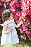 Admiring Azaleas Stock Image