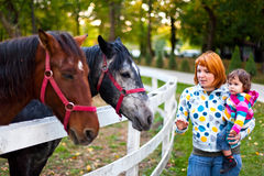 Admiring horses Stock Photography