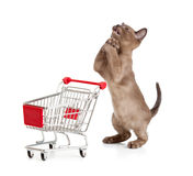 Admiring kitten or cat with shopping cart Stock Image