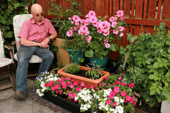 Admiring Patio garden. Elderly gentleman admires his small patio garden of bedding plants and herbs making a colourful display Royalty Free Stock Photography