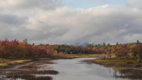 Admission colorée de feuillage Photographie stock libre de droits