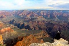Admitir la belleza cruda de Grand Canyon Foto de archivo