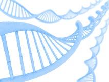 ADN Imagens de Stock