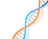 ADN Imagem de Stock