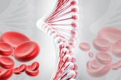 ADN avec des globules sanguins Photos libres de droits