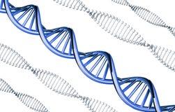 ADN azul proeminente, gene dominante, isolado no fundo branco ilustração do vetor