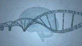 ADN humano, o cérebro Fundo abstrato com plexo Animação do laço ilustração royalty free