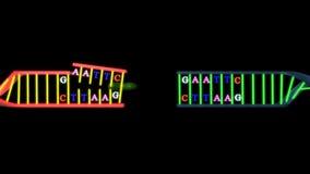 ADN recombiné illustration libre de droits
