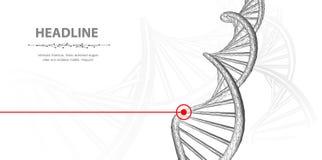 ADN Spirale polygonale d'h?lice de mol?cule d'ADN de wireframe du r?sum? 3d sur le fond blanc photo stock