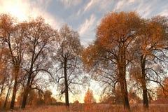 Ładna jesienna scena z wielkimi colours Obraz Stock