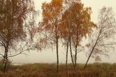 Ładna jesienna scena z wielkimi colours Obrazy Royalty Free