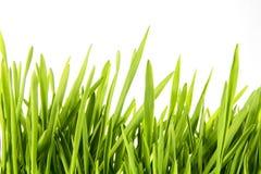 Ładna Pszeniczna trawa Obrazy Royalty Free