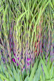 Ładna purpurowa wiosna kwitnie przybycie w kwiat Obraz Royalty Free