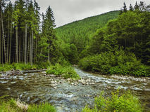 Ładna scena z halnym rzecznym Prut w zielonym Karpackim lesie Zdjęcia Royalty Free