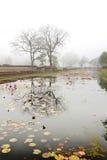 Ładna wczesny poranek scena na jeziorze Obrazy Royalty Free