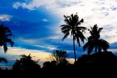 Ładni drzewka palmowe w niebieskim niebie Kokosowi drzewka palmowe Zdjęcia Stock