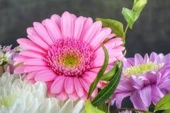 Ładni kwiaty Zdjęcia Royalty Free