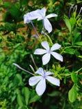 Ładni kwiaty Obraz Stock