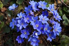 Ładni wiosna kwiaty zdjęcie stock
