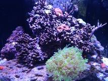 Ładny akwarium Zdjęcie Royalty Free