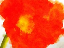 Ładny czerwony maczek Obrazy Royalty Free