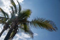 Ładny drzewko palmowe Obrazy Royalty Free