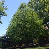Ładny drzewo Zdjęcia Royalty Free