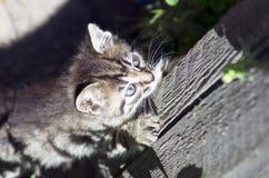 Ładny kot Fotografia Stock