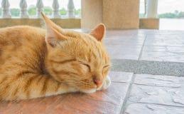 Ładny kota sen w outside domowy wizerunek Zdjęcie Royalty Free