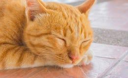 Ładny kota sen w outside domowy wizerunek Obrazy Royalty Free