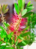Ładny kwiat Obraz Stock