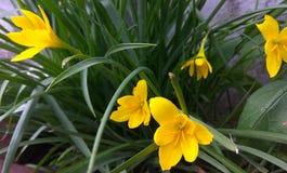 Ładny kwiat Zdjęcia Stock