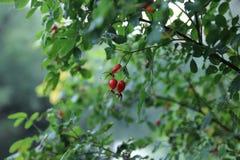 Ładny obrazek w lesie Zdjęcie Stock