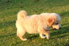 Ładny pies Zdjęcia Royalty Free