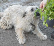 Ładny pies Obrazy Royalty Free