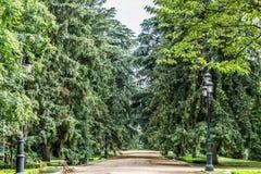 Ładny spacer z luksusowymi drzewami na stronach obraz stock