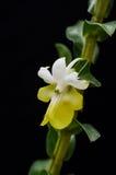 Ładny storczykowy kwiat Obrazy Stock