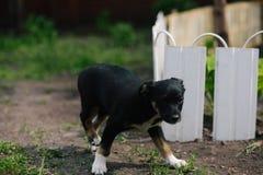 Ładny szczeniaka obsiadanie Fotografia Stock