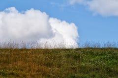 Ładny trawa dach w Norway Fotografia Stock